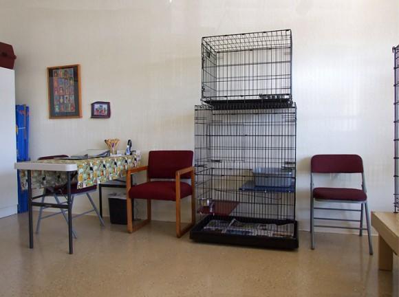 Cat Room4