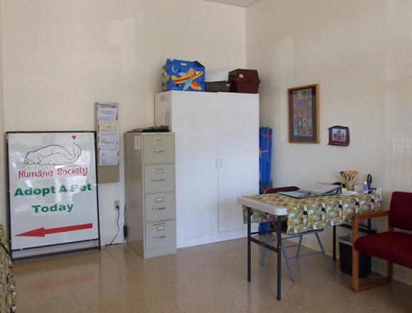Cat Room5