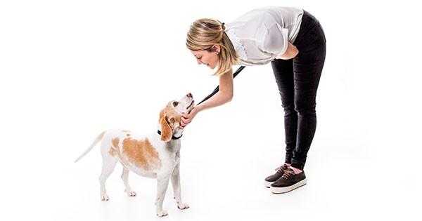 Calaveras Humane Society - volunteer to help