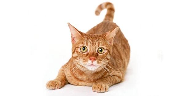 cat directory