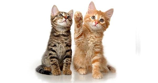 kitten directory