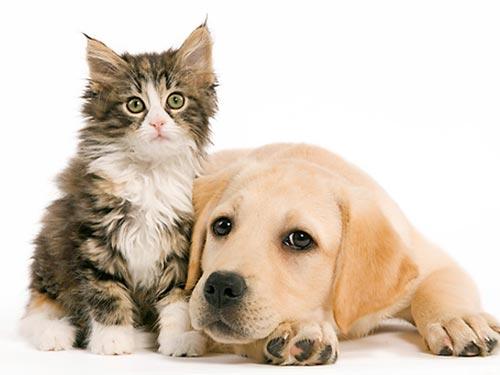 Calaveras Humane Society Participate