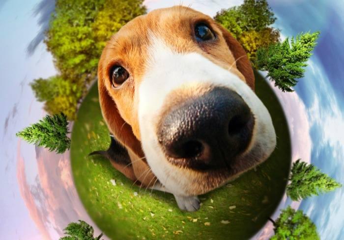 Earth Dog