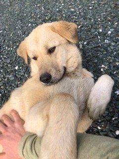 Female Dog Found in Murphys