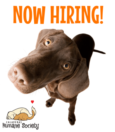 Now Hiring for a P/T Animal Care Tech!