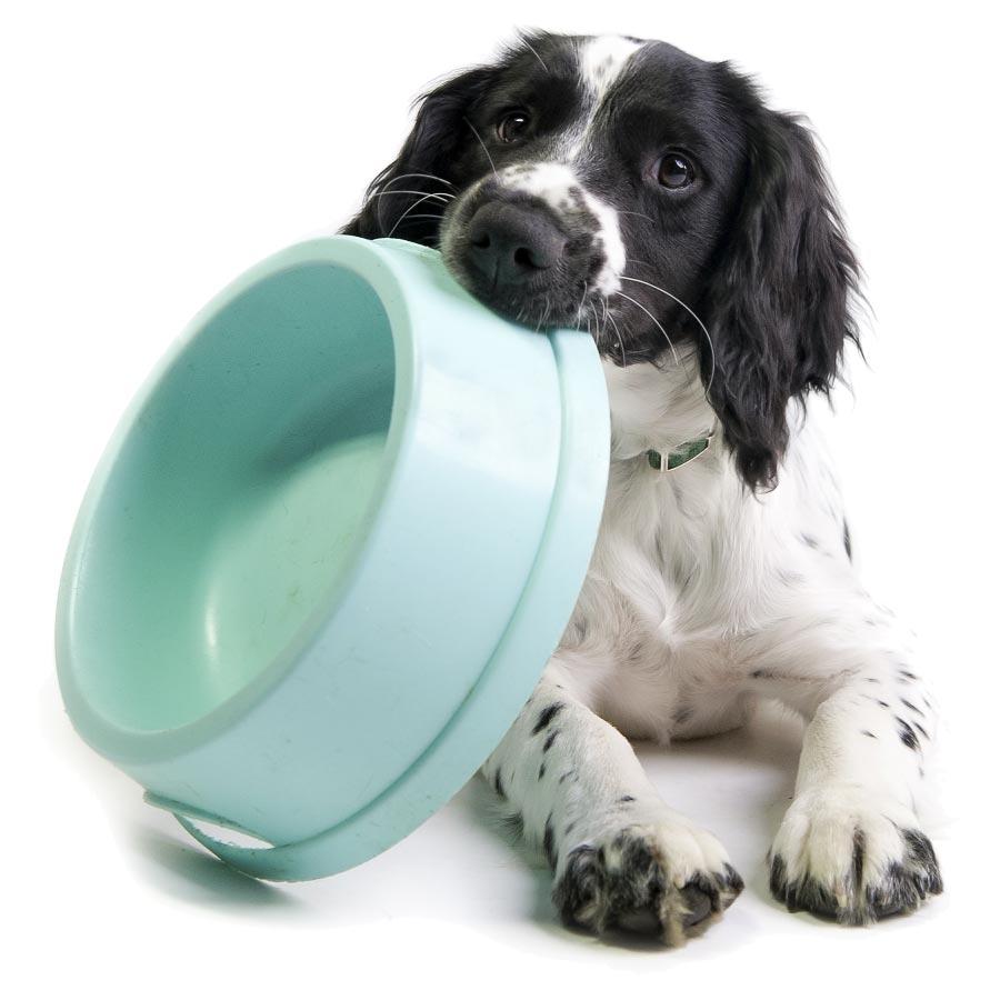 food needed - dog with aqua bowl