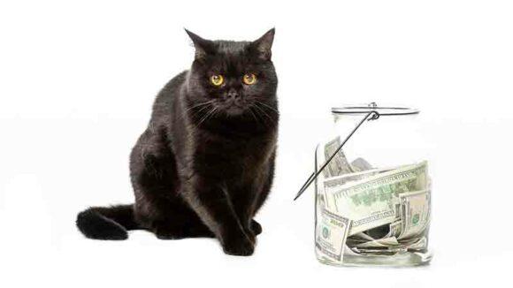 donation cat