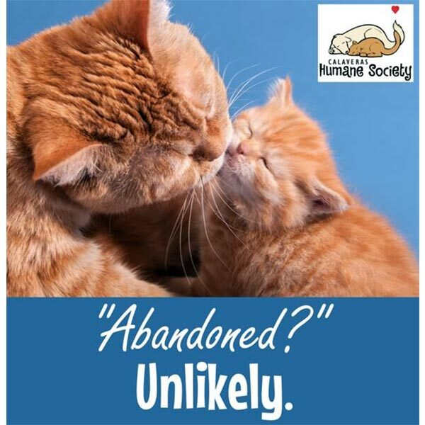 Abandoned kittens are unlikely