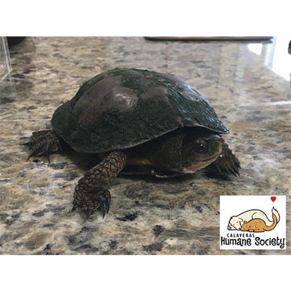 Shelldon the turtle going to Milo's Reptile Rescue