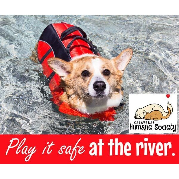 Play it safe at the river - use life jackets for your pets