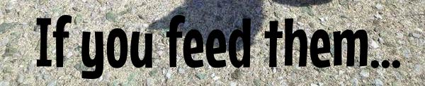If You Feed Them
