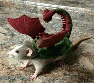 Fancy the dragon rat - costume contest winner
