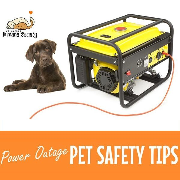 Power outage pet safety tips