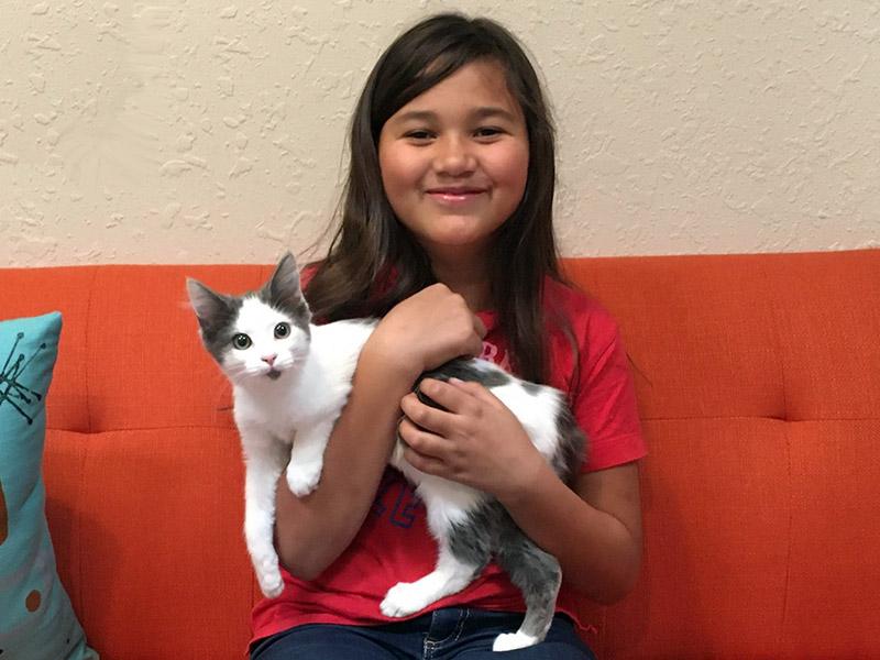 Aurora cat adopted November 2019