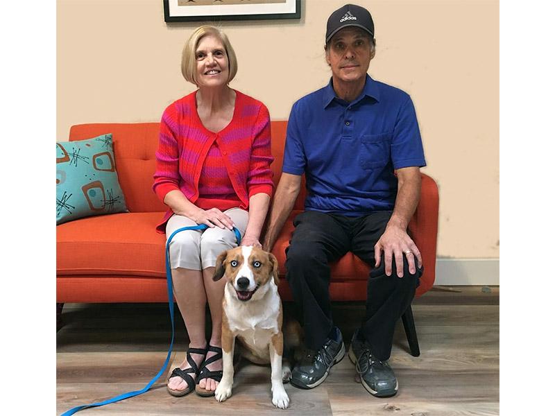Finn dog adopted November 2019