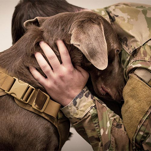 Free pets for veterans 2019