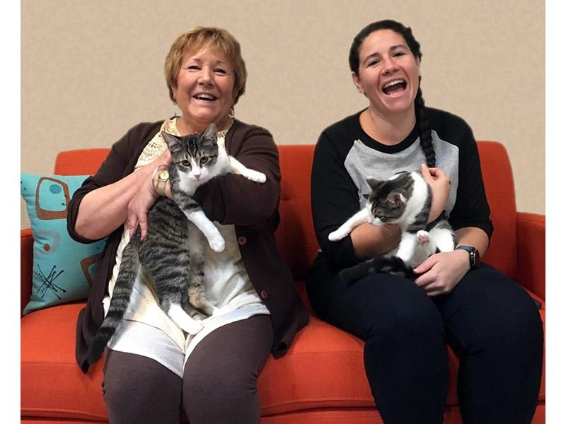 Juno and Minerva cats adopted November 2019
