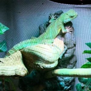 Milo's Misfits Reptile Rescue