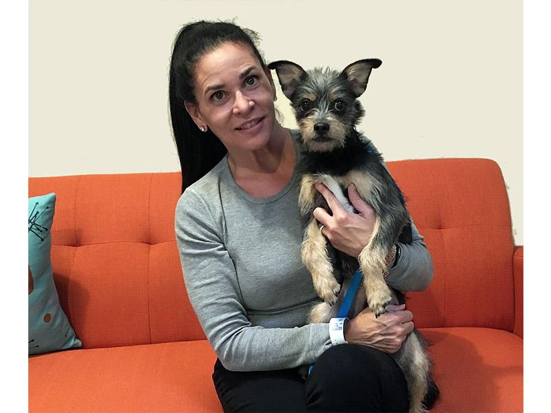 Pinto dog adopted November 2019