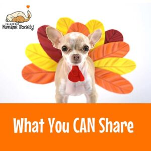 Thanksgiving - What foods can you safely share with your pet?