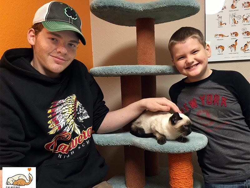 Bonsai cat adopted December 2019