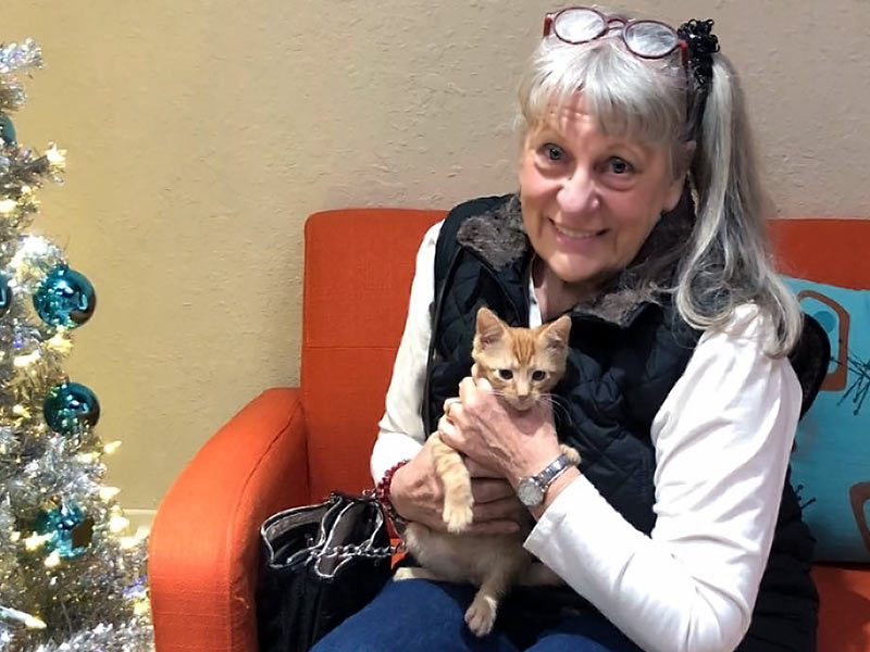 Milo cat adopted December 2019