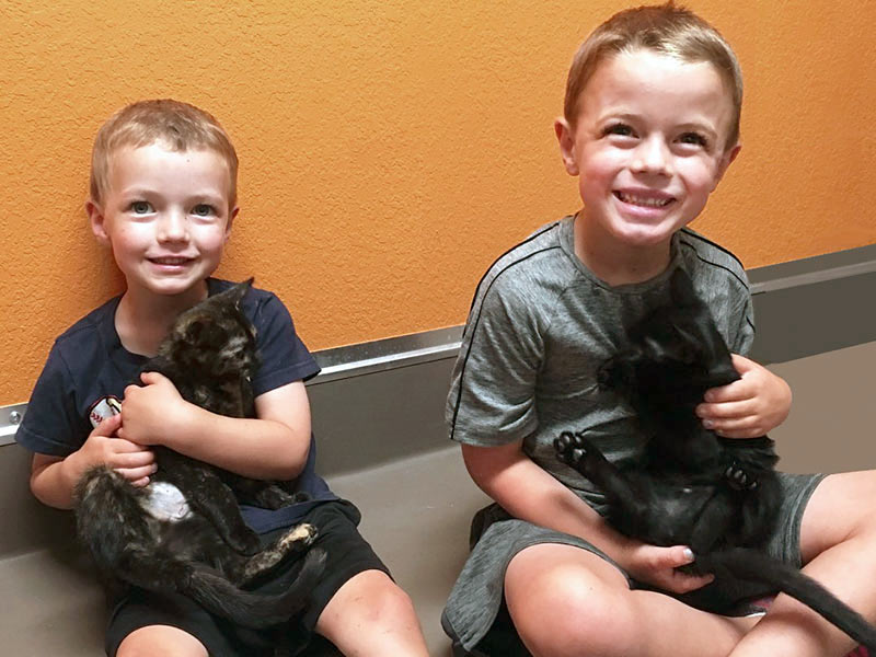 Rosemary and Shadow cat adopted August 2019