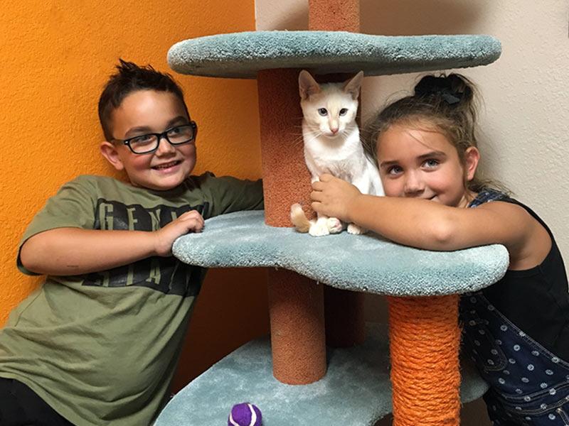 Edgar cat adopted August 2019