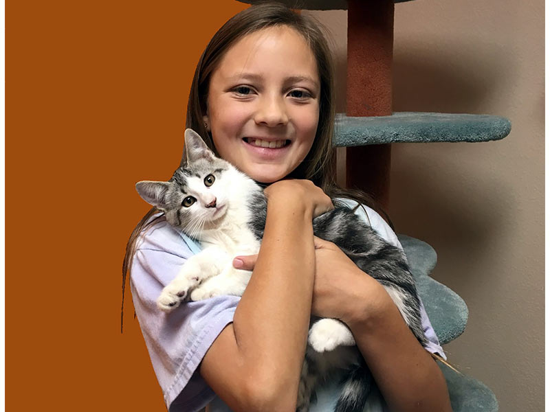 Greystone cat adopted August 2019