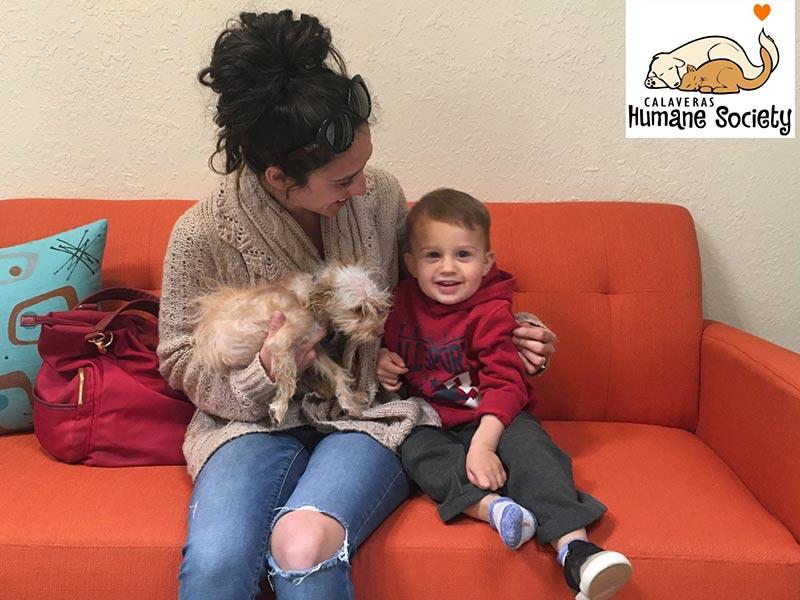 Lulu dog adopted October 2019