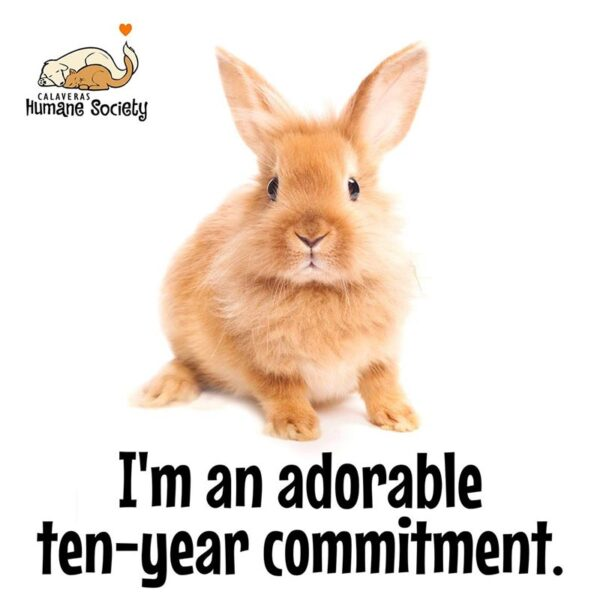 Rabbits are a commitment