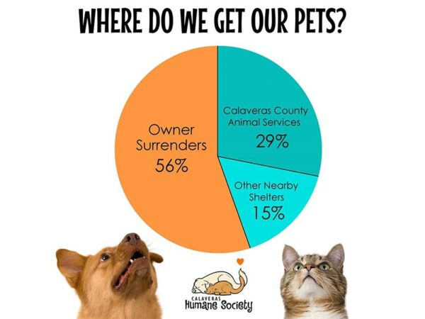 Where do we get our pets?