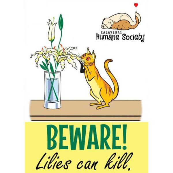 Beware! Lilies can kill.