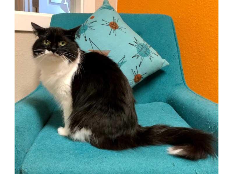 Kona cat adopted February 2020