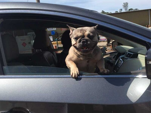 Happy dog at pet food drive through event