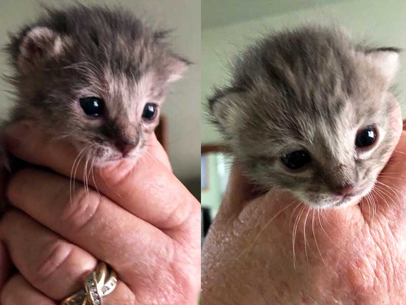 Prada and Gucci cats foster home April 2020