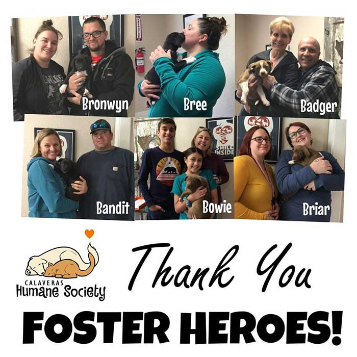 Thank you hero foster families!
