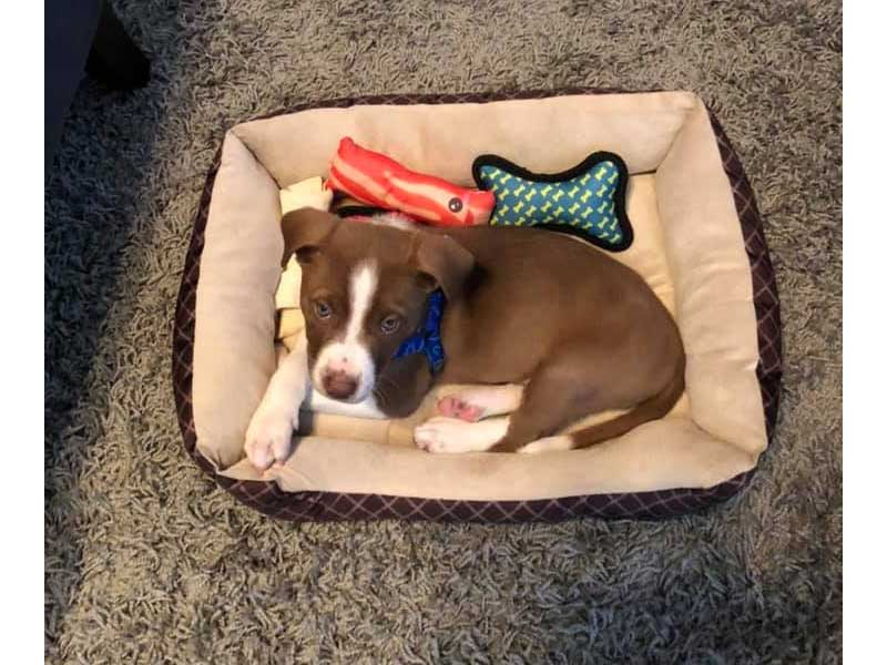 Waco puppy dog foster home March 2020