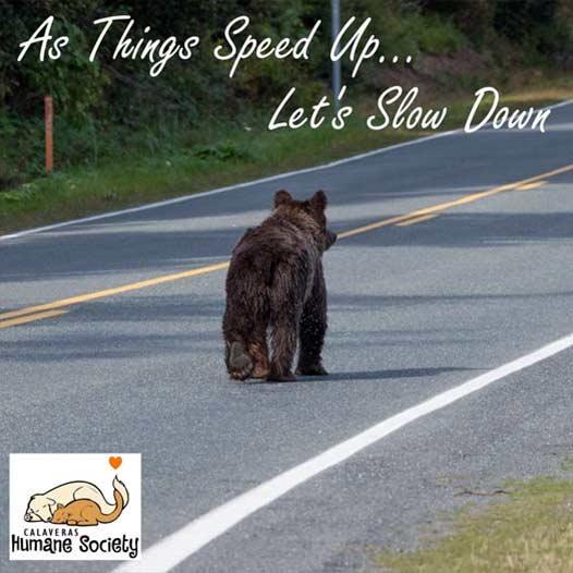Bear in roadway