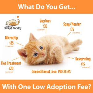 What do you get for one low adoption fee?