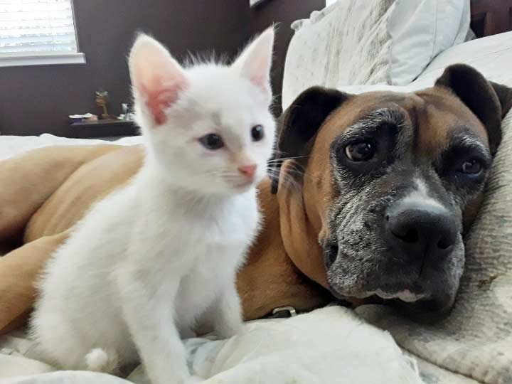 Kitten Grasshopper at foster home with dog Colette
