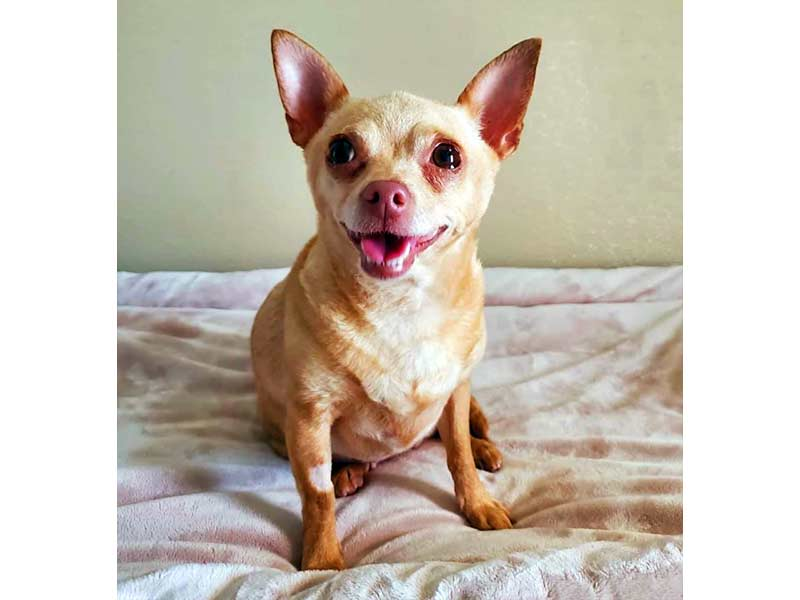 Mabel dog adopted June 2020