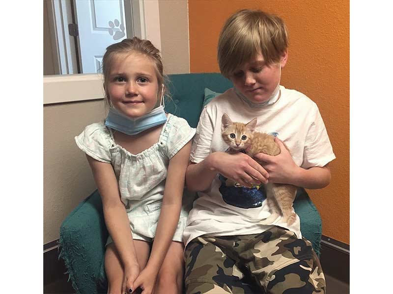 sheila cat adopted June 2020