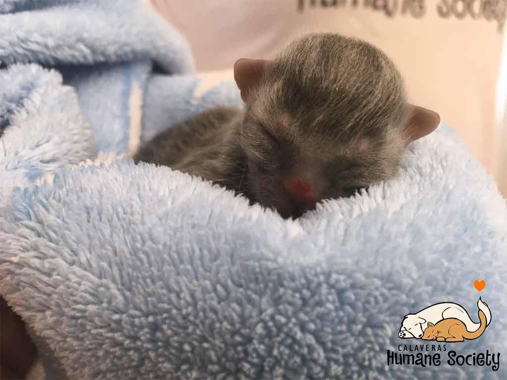 tiniest kitten