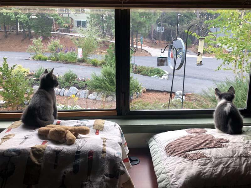 Bird watching foster kittens