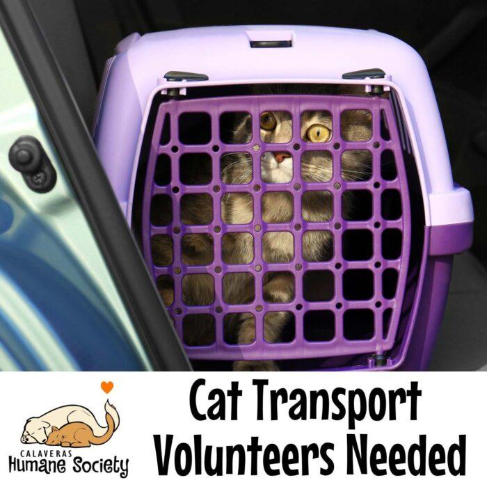 Cat transport volunteers needed