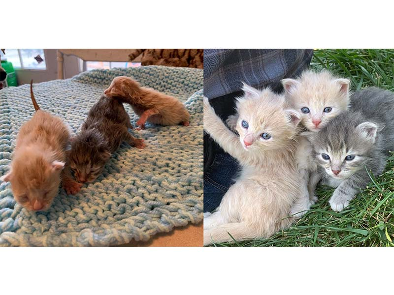 Foster kittens - what four weeks can do