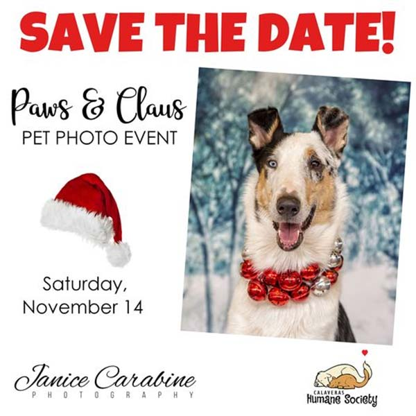 Save the date for our Paws and Claus pet photo event