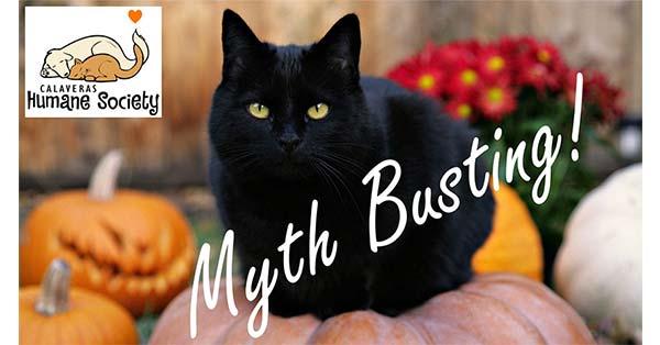Black cats at Halloween? Yep.