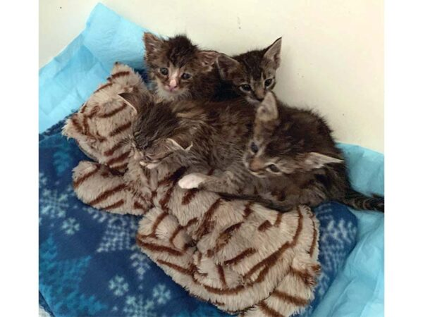 Kittens with surrogate mama